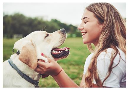 2019-bl-nutraceutical-trends-pet-supplements-page-image