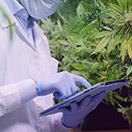 2021-bl-cannabis_132x132